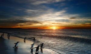 Iles Falkland (Malvinas)