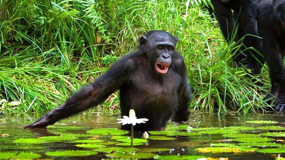 Nature Congo-Kinshasa